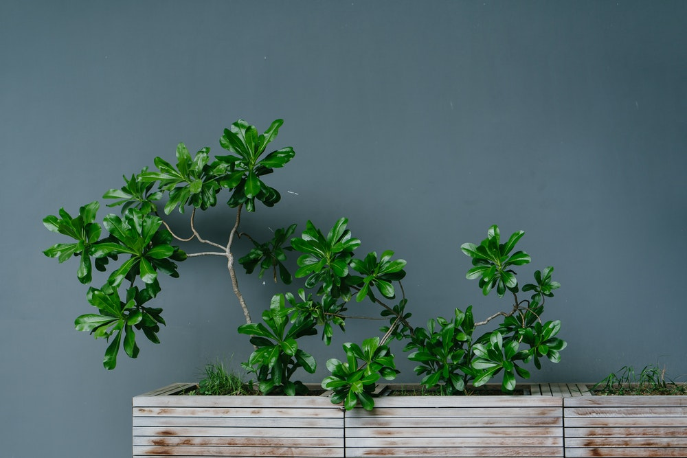 Things to keep in mind when planning to add plants to your space