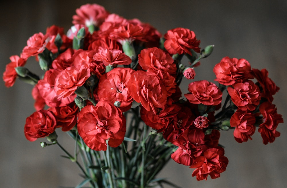 Most Beautiful Flowers That Are Perfect To Convey Your Emotions